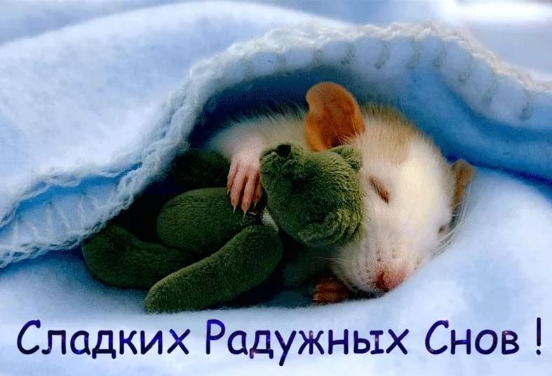 Картинки спокойной ночи сладких снов веселые